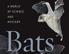 Bats_A World of Science and Mystery240x187