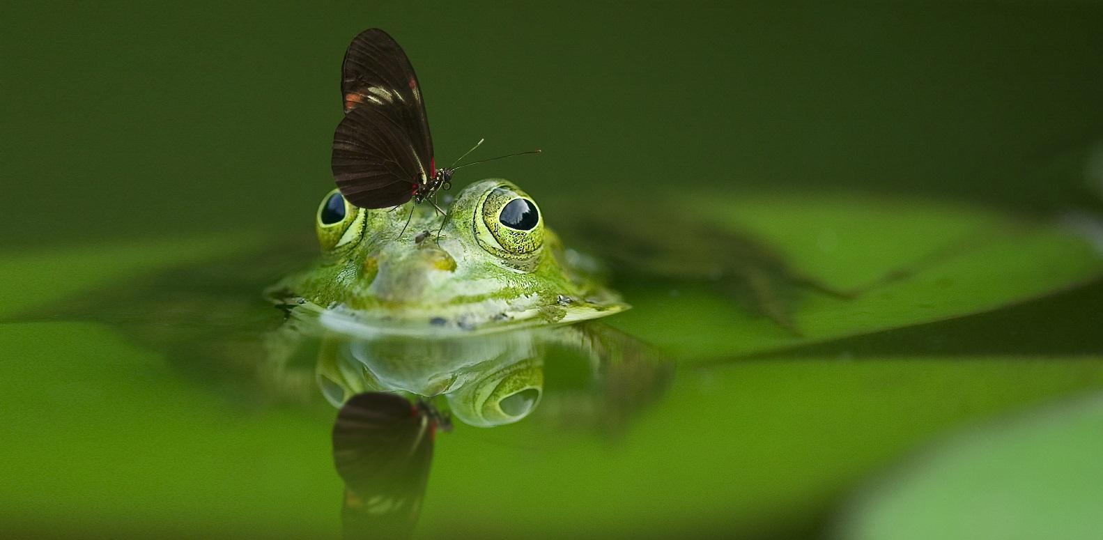 Frog (1583x775)