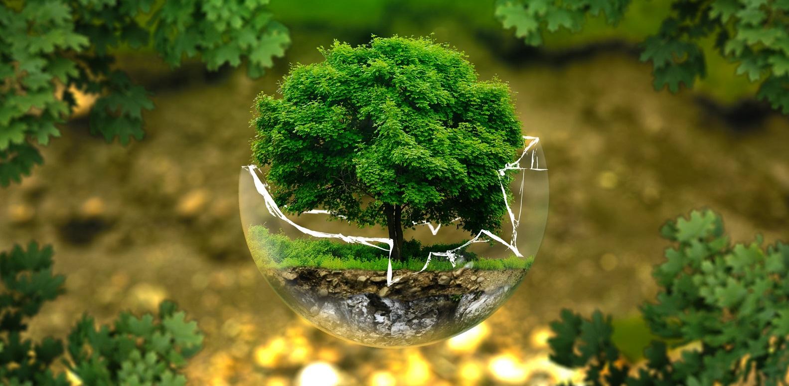 Tree Globe (1583x775)