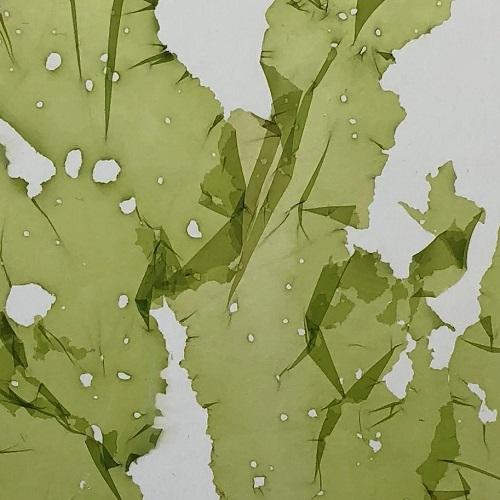 Algae (500x500)