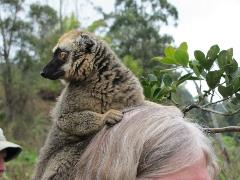 lemur on head